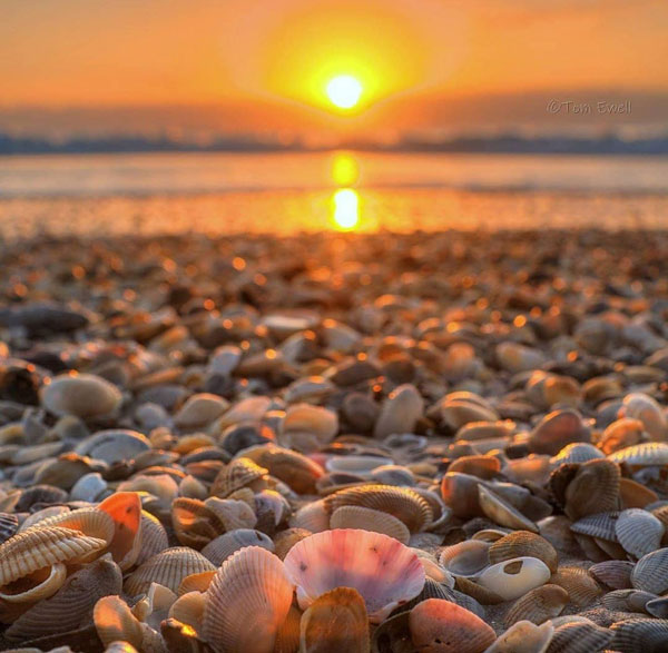 Sunrise at the beach with sea shells
